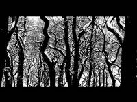Trees (Endcliffe Park, Sheffield)