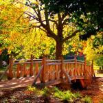 """Autumn Bridge (Weston Park Sheffield)"" by diavolo_felice"