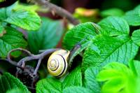 Snail´s pace