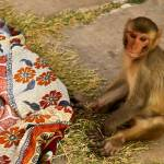 """Monkey Temple - Jaipur, India"" by 2UNB"