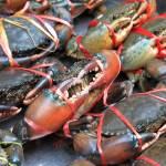 """Crabs! - Bangkok, Thailand"" by 2UNB"