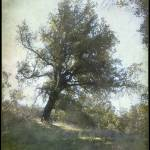 """""""Once upon a tree"""" by imagepeace"""