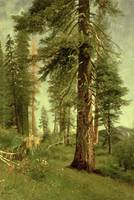 California Redwoods, by Albert Bierstadt
