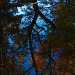 """Reflections"" by jacksworld82"