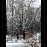 """Winter & snow !"" by fejesb"