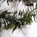 """""""Snow"""" by fejesb"""