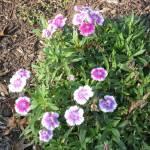 """""""Purple flowers"""" by oldawnie"""