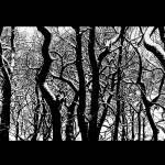 """""""Trees (Endcliffe Park, Sheffield)"""" by diavolo_felice"""