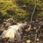 """Leaf, pebbles, twigs, moss"" by oldawnie"