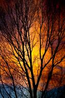 Colorful Glowing Tree Silhouettes