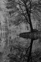 Black & White Autumn Reflection