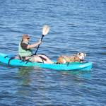 """DOG In Kayak"" by barbsummering"