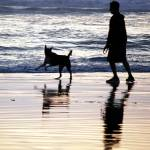 """DOG-Running on Beach"" by barbsummering"