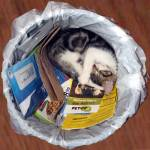 """KITTEN ASLEEP IN GARBAGE CAN"" by barbsummering"