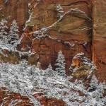 Zion Canyon spring snow