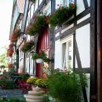 """""""Diemelstadt flowers"""" by nicoindo"""