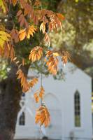 Fall Leaves, St. Johns Church, Coloma