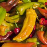 """Brilliantly Colored Sweet Peppers II"" by SederquistPhotography"