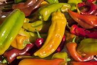 Brilliantly Colored Sweet Peppers II