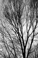 Black and White Tree Branches Silhouette