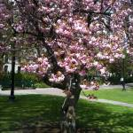 """""""Spring in Boston"""" by AnitaCouto"""