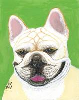 Marcel, French Bulldog Dog Portrait