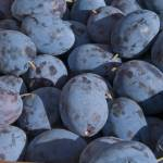 """Plums, Farmers Market"" by SederquistPhotography"