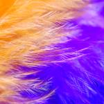 """Abstract Feather Macro"" by Larah"