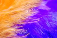 Abstract Feather Macro
