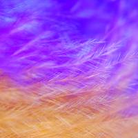 """Abstract Feather Macro"" by Larah McElroy"