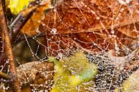 Spiders Web in Autumn
