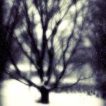 """Winter Tree 3"" by PerryWebster"