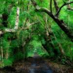 """Trail of Trees"" by DanielRoxburgh"