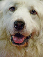 great pyr