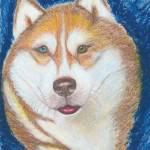 """Alek, Siberian Husky Dog Portrait"" by AniaMMiloART"