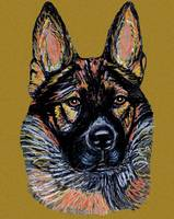 Ulrike, Greman Shepherd Dog Portrait