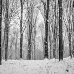 """Winter Woods"" by ZeipekisPhotography"