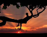 Tree Thinker at Sunset
