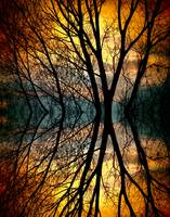 Sunset Tree Silhouette Abstract 3