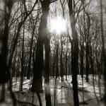 """Winter Sun"" by robvena"