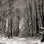 """Winter Trail"" by robvena"