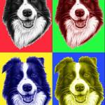 """BorderCollie Popart"" by ArtsandDogs"