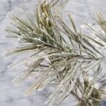 """snowy pine"" by mcinallysphotos"