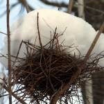 """winter bird nest"" by mcinallysphotos"
