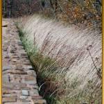 """Grassy Edge"" by byStangz"