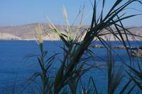 Paradise through a plant - Mykonos