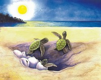'Hatchlings'  Green Sea Turtles