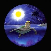Green Sea Turtle in Halfmoon Bay by Savanna Redman