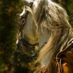 """""""Charro Horse"""" by LynnR"""