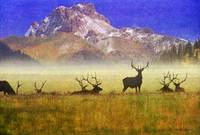 big sky bull elk gathering